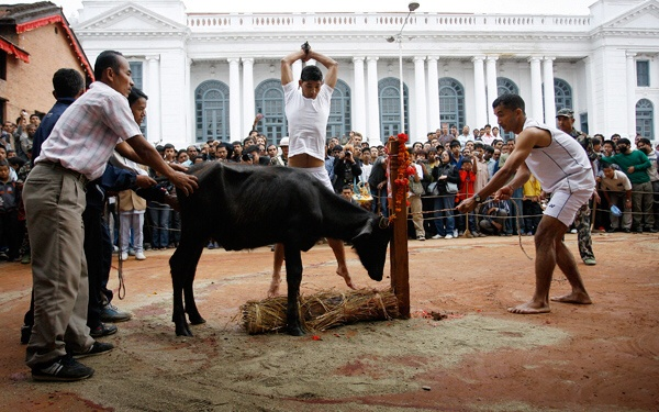Nepal: The festival of sacrifices